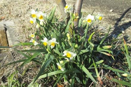 春は近づいてきています!!